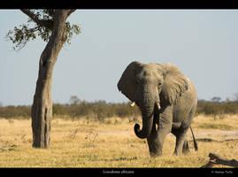 Elephant by Bahaloo