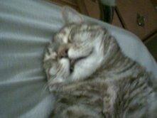 Fat cat Gizmo 2 by shoujoartist