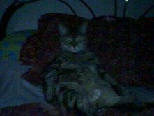 Fat cat Gizmo 3 by shoujoartist