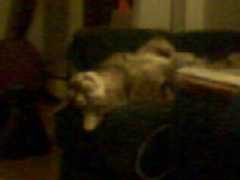 Fat cat Gizmo 4 by shoujoartist