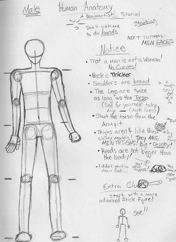 Male Anatomy Tutorial by shoujoartist