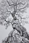 Old olive tree III by rougealizarine