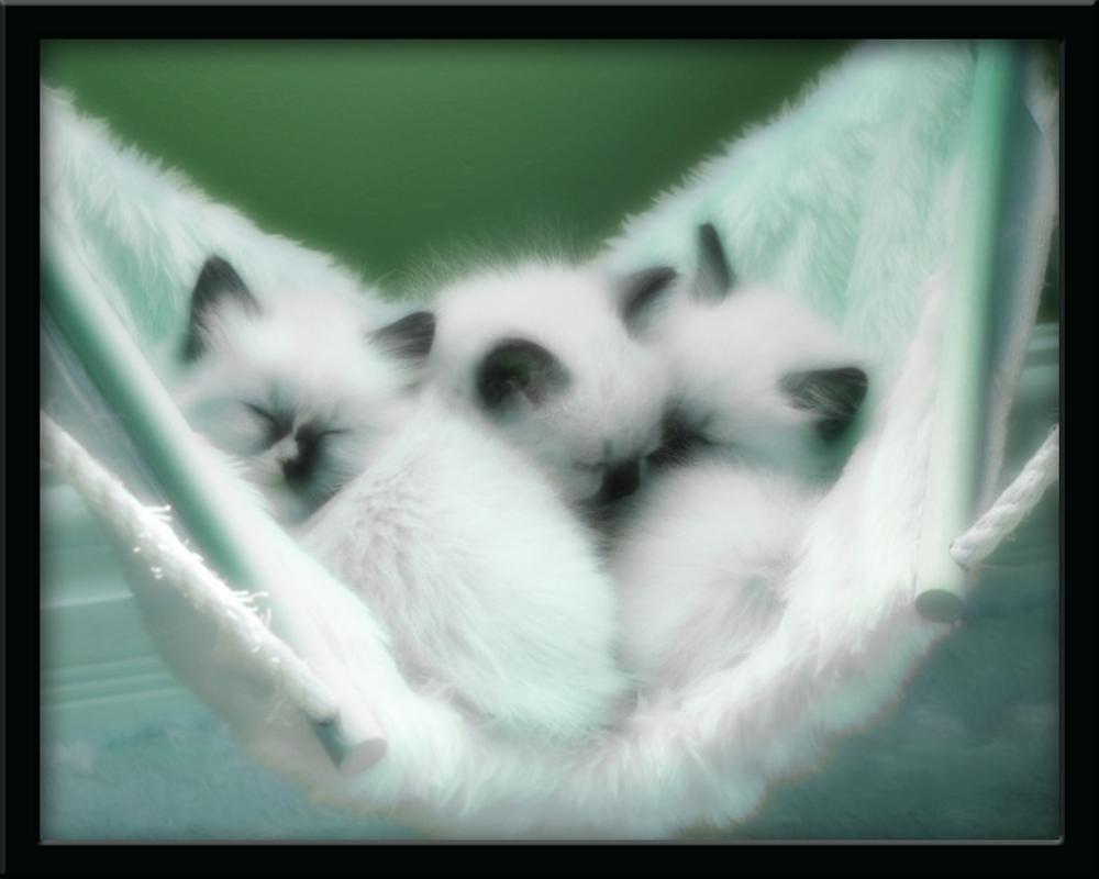 Catnap Kitties 5 by welshdragon