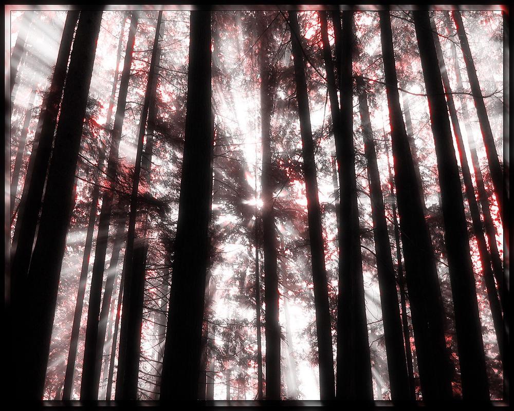 Precious Sunrise 3 by welshdragon