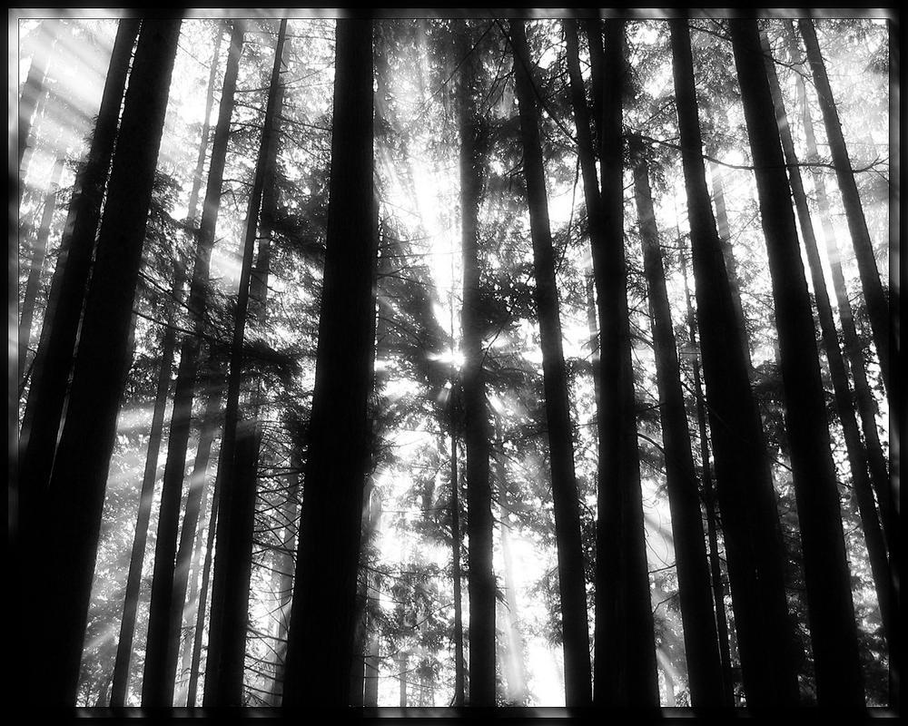 Precious Sunrise 4 by welshdragon
