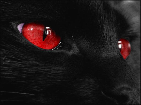 Black Cat 5 by welshdragon