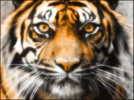 Tiger Tiger by welshdragon
