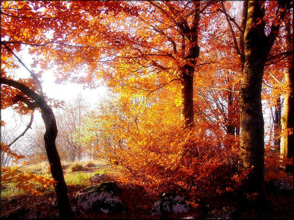 Autumn Woodland by welshdragon
