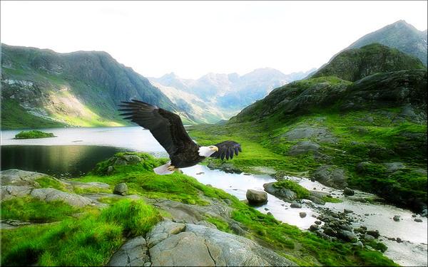 Highland by welshdragon