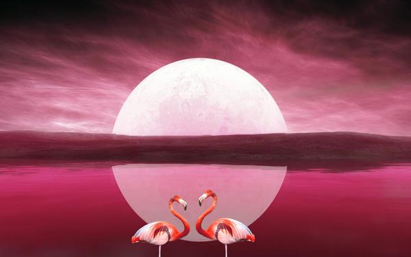 Moonlight Love 3 by welshdragon