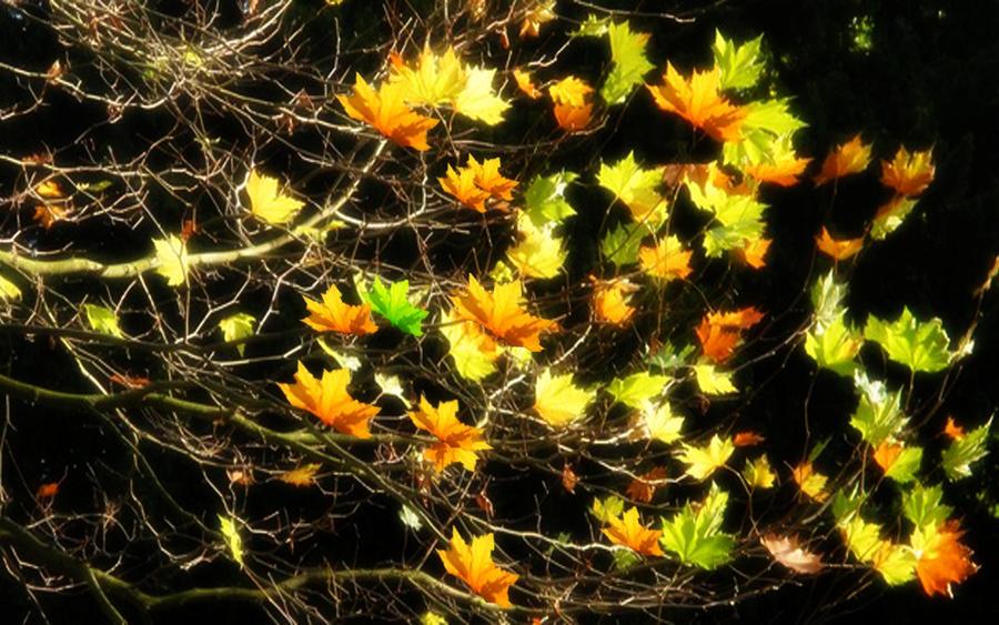 Autumn Breeze by welshdragon