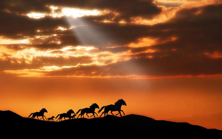 Runaway Horses by welshdragon