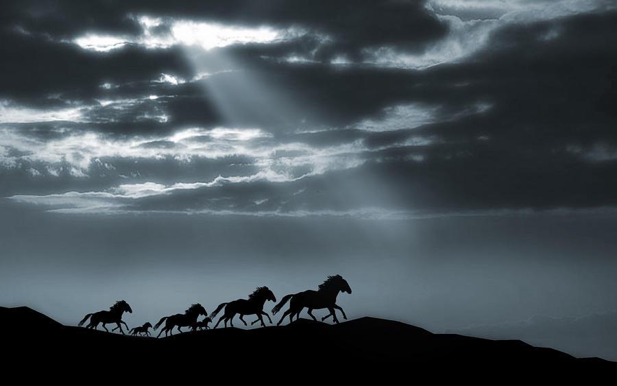 Runaway Horses 3 by welshdragon