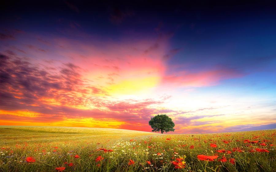 The Poppy Field by welshdragon