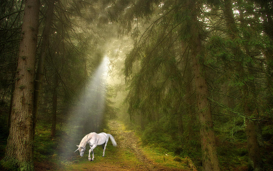 The Magic Wood by welshdragon