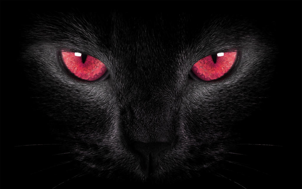 Black Cat With Pink Scary Eyes: Black Cat Red Eyes By Welshdragon On DeviantArt