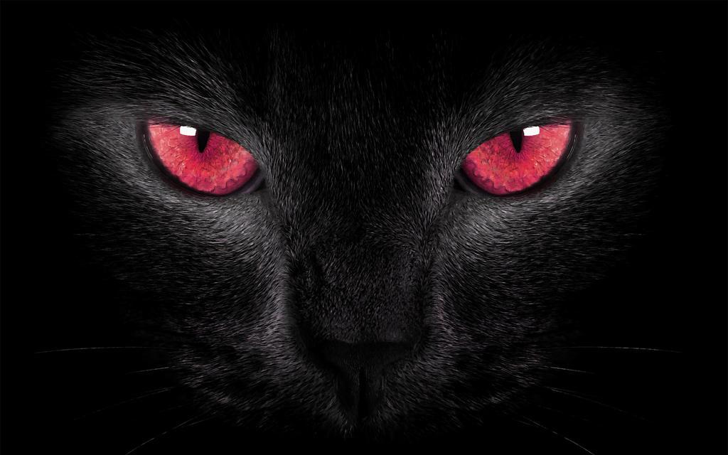red cat eyes wallpaper - photo #2