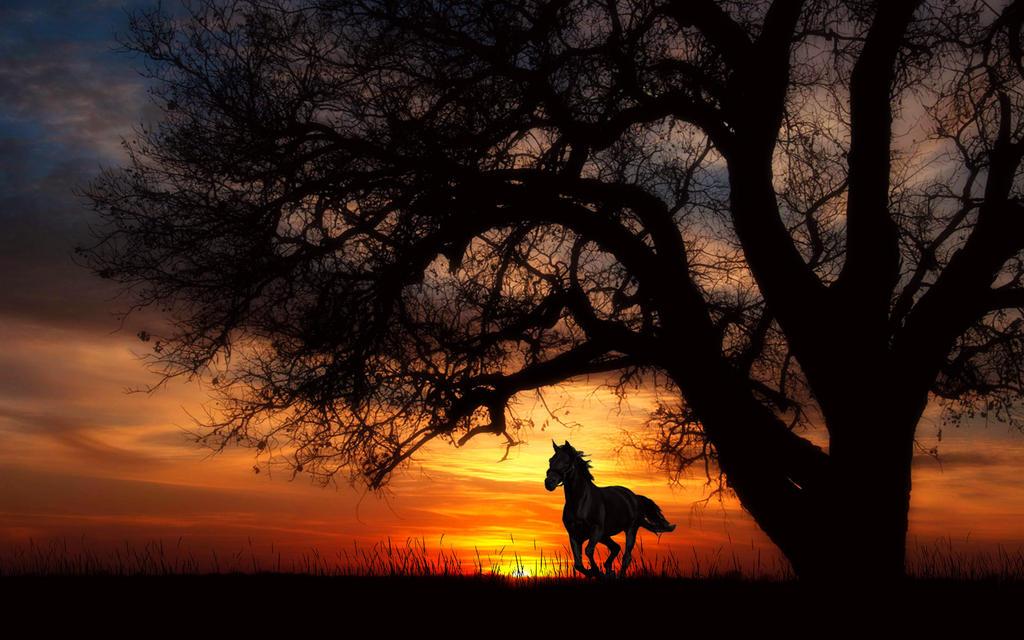 Ride Like The Wind by welshdragon