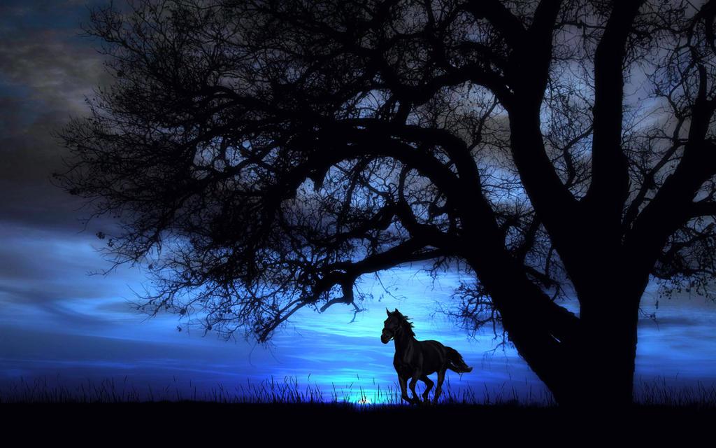 Ride Like The Wind 2 by welshdragon