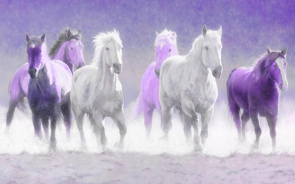 wallpaper horse tonight welshdragon - photo #12