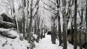 Winter Wonderland by Andrei-Azanfirei