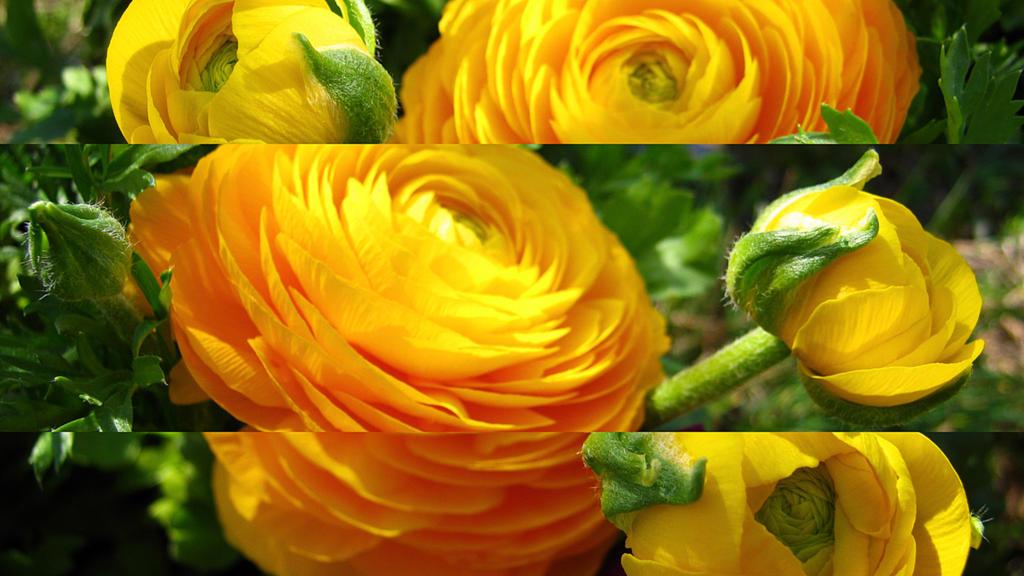 Yellow burst by Andrei-Azanfirei