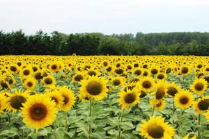 Symbol of summer by Andrei-Azanfirei
