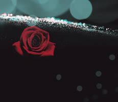 rose by neelohoney
