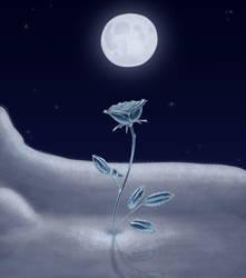 Winter Rose by salaiek