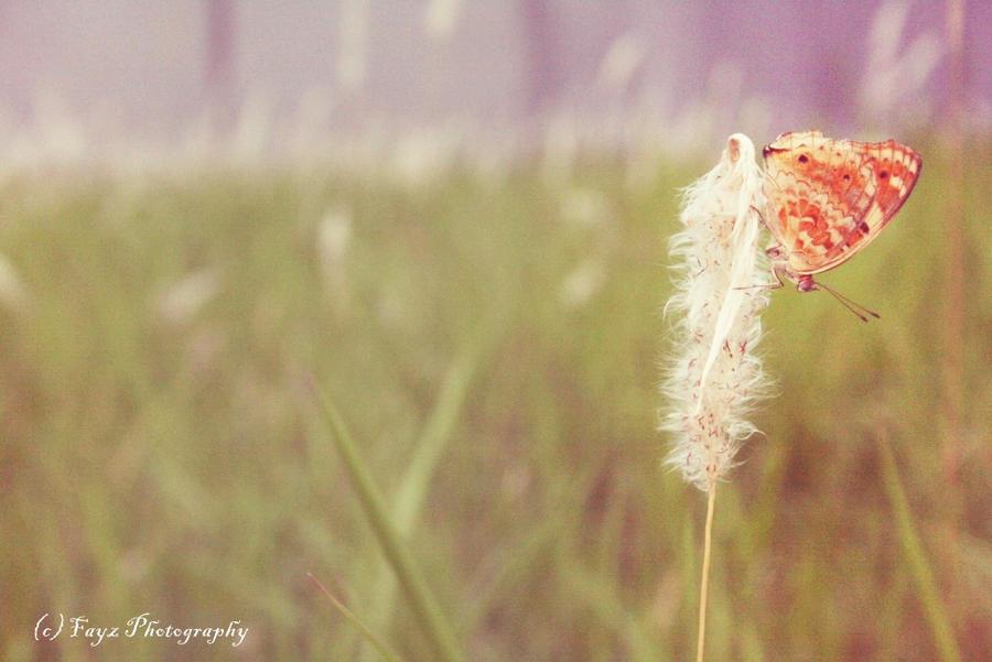 A Butterfly by FayzSyaifullah
