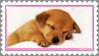 Stamp - Puppy by fmr0