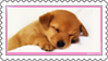 Stamp - Puppy by fmr0