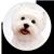 Icon - Sweet Dog