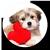 Icon - Lovely Dog