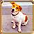 Icon - Cute Dog by fmr0