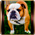 Icon - Bulldog