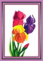 Irises by fmr0