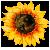 Icon - Sunflower