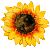 Icon - Sunflower by fmr0