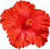 Icon - Red Hibiscus