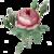 Icon - Pink Rose