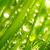 Icon - Fresh Green by fmr0