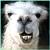Icon - Llama by fmr0