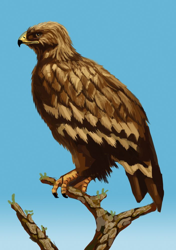 Eagle by Beaver-Skin