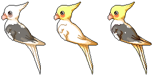 [15.] Cockatiels FREE by Niampi