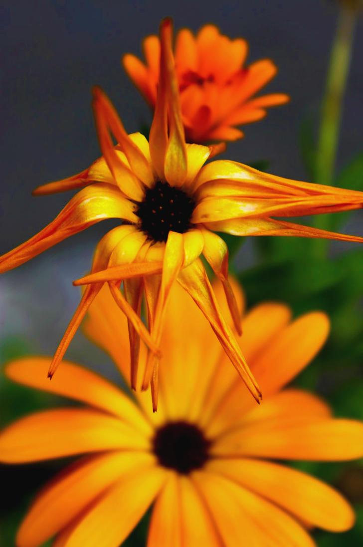 Flowers (9) by captjimini