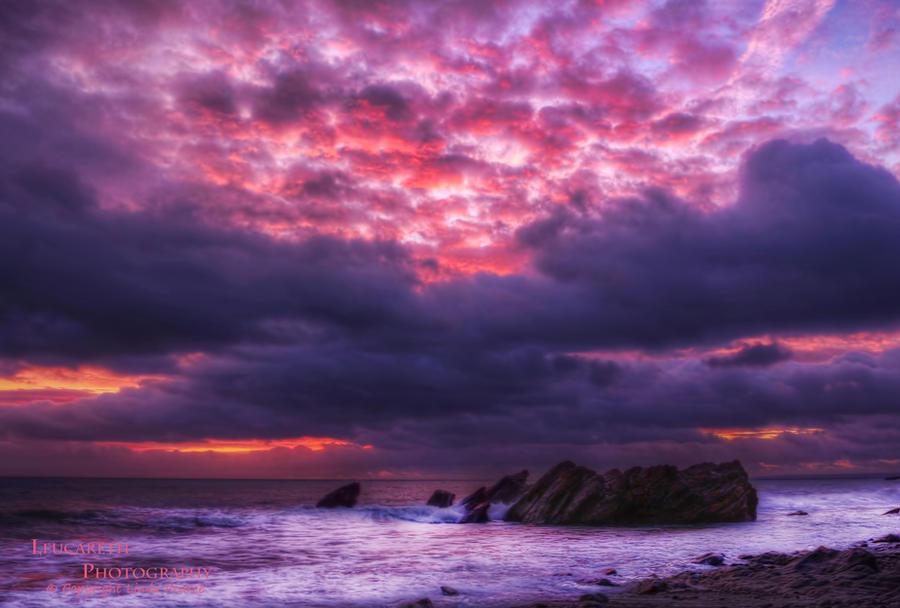 Purple Haze by Leucareth