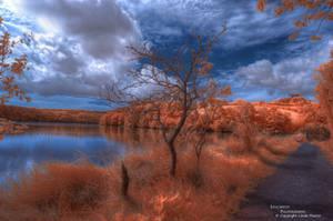 Tangerine Dream by Leucareth