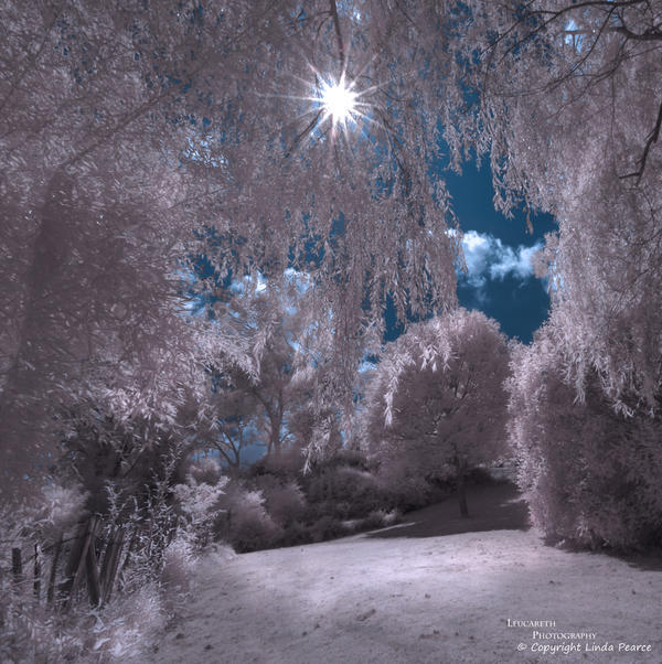 Dreams II by Leucareth