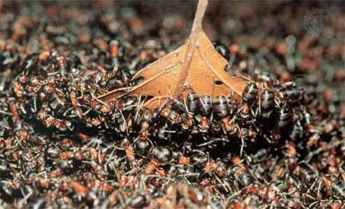 International The Tyler Group Reviews: Ants an sav by verametsys